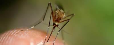 moustique savoir