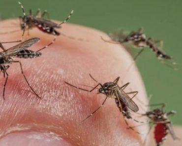 moustiques_tigres_roger_eritja_biosphoto