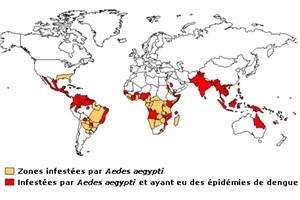 carte moustique monde
